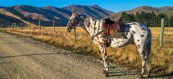 DSC01905-Great NZ Trek